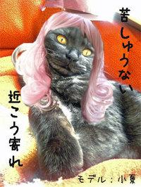 Konatsu1_3